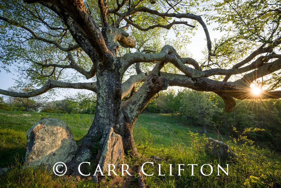 114-1018-VA_carr_clifton