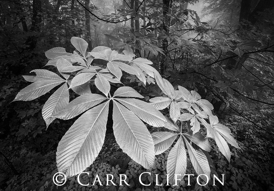 114-1298-NC_carr_clifton