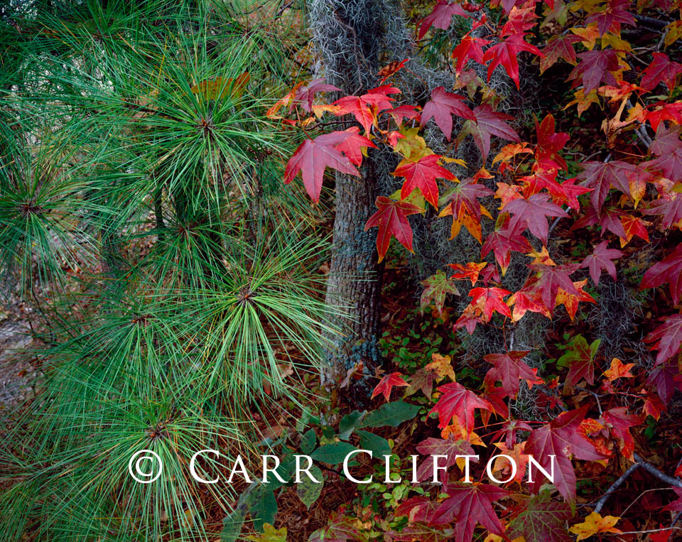 87-20-VA-i_copyright_carr_clifton