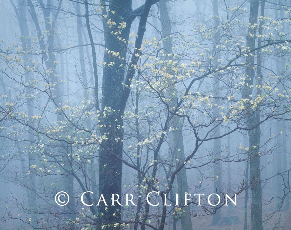 92-1-VA-i_copyright_carr_clifton