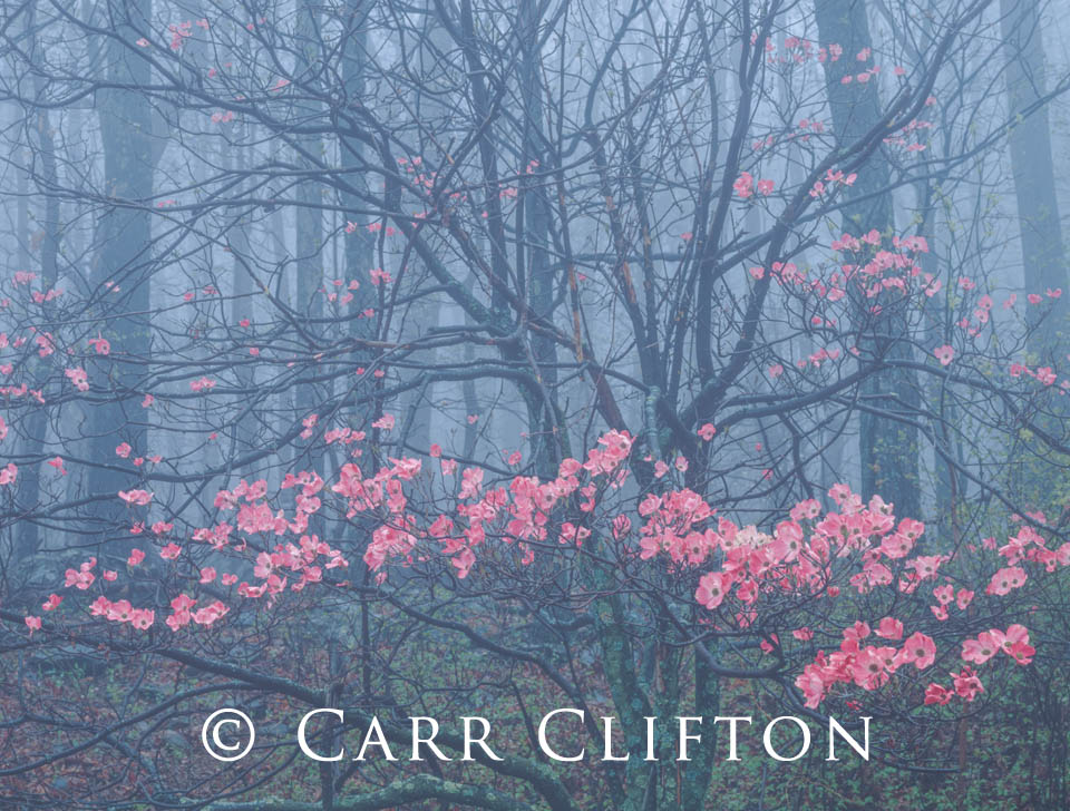 92-2-VA-i_carr_clifton