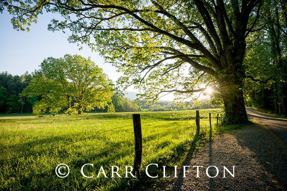 114-1013-TN_carr_clifton