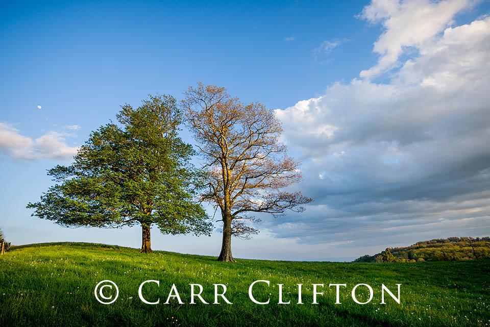 114-1126-NC_carr_clifton