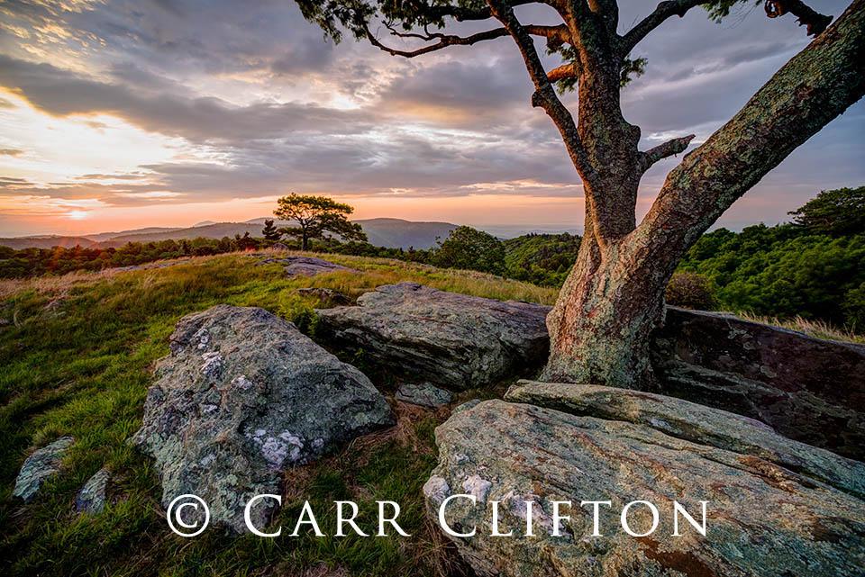 114-1199-NC_carr_clifton