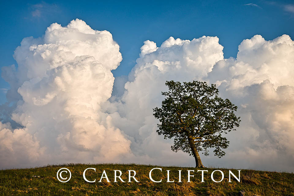 114-1213-NC_carr_clifton