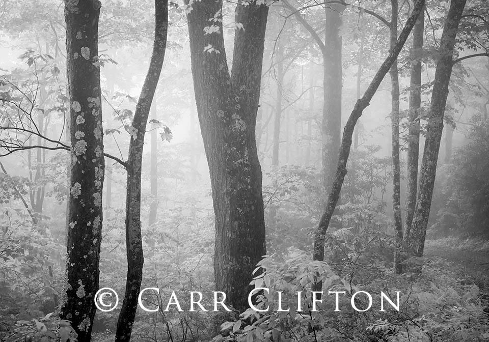114-1280-NC-2_carr_clifton