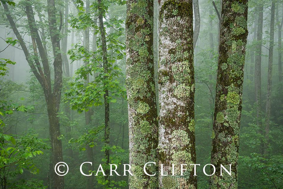 114-1302-NC_carr_clifton