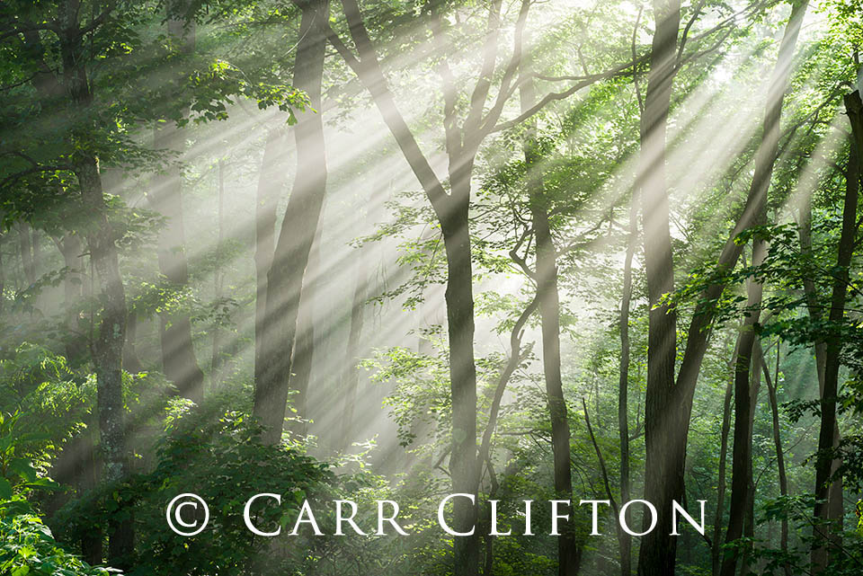 114-1568-NC_carr_clifton