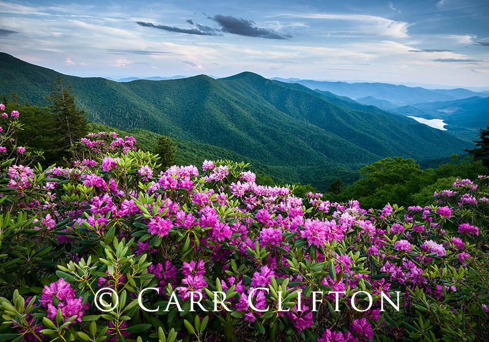 114-1602-NC_carr_clifton