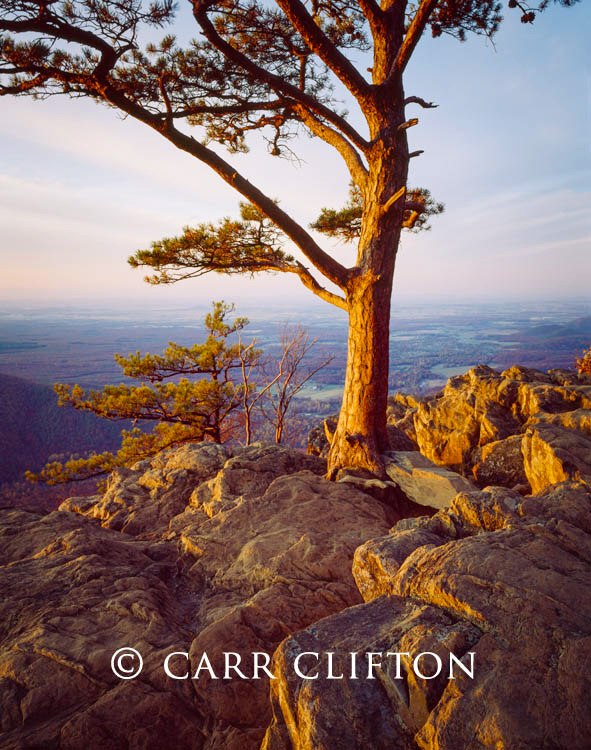 87-40-VA-i_copyright_carr_clifton