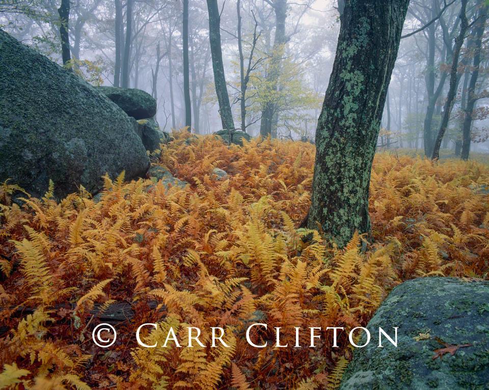 92-34-VA-i_copyright_carr_clifton