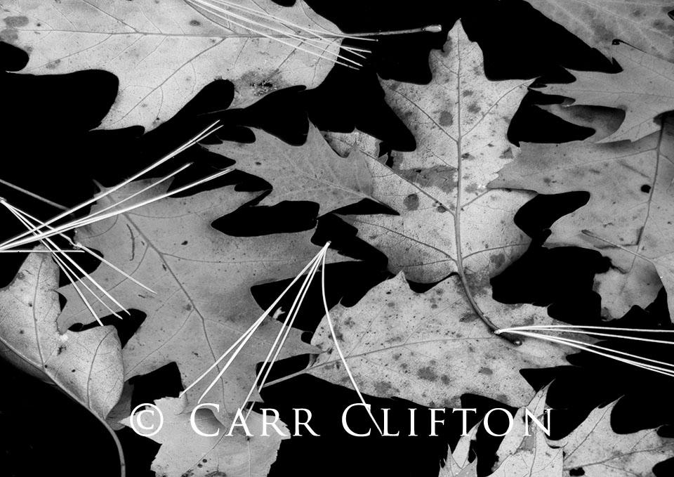 86-45-NY-i_copyright_carr_clifton