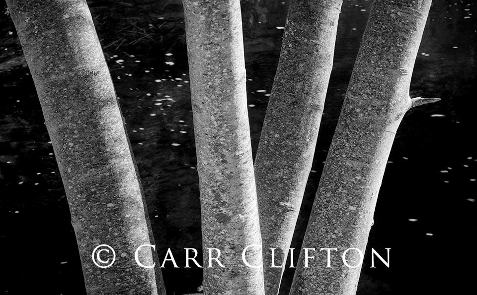 112-1047-CA_carr_clifton