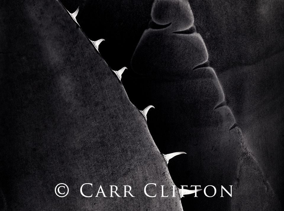117-1429-CA-2_carr_clifton