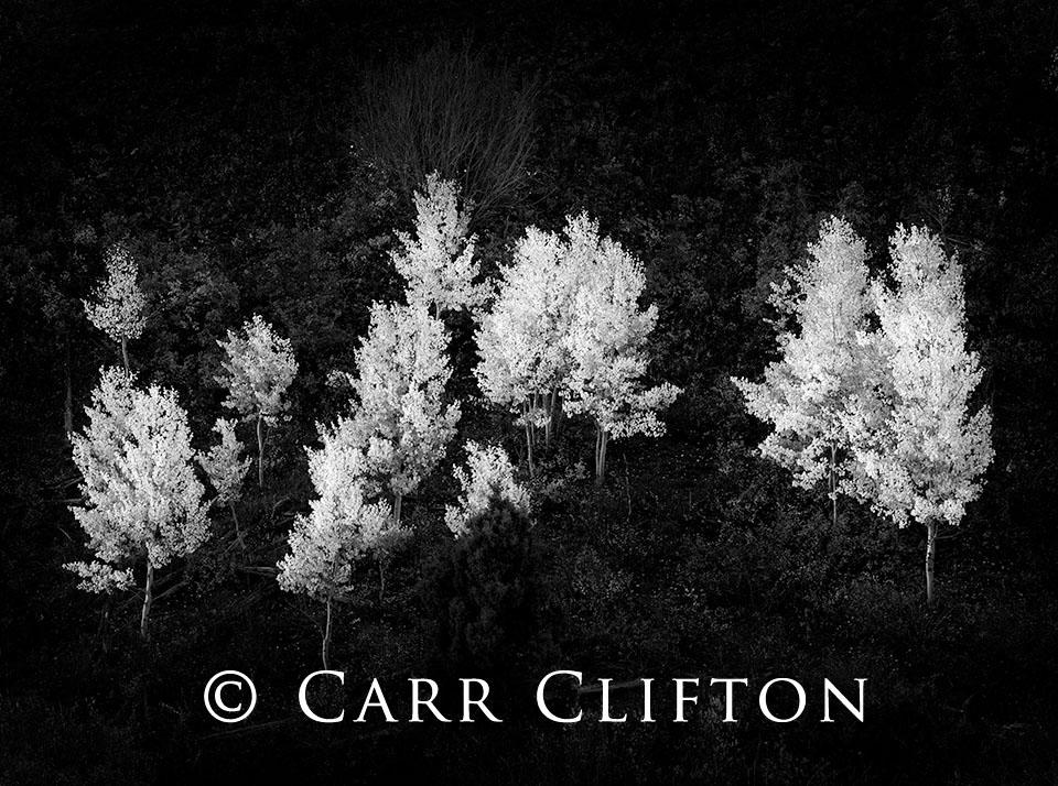 97-4-CO-i_carr_clifton