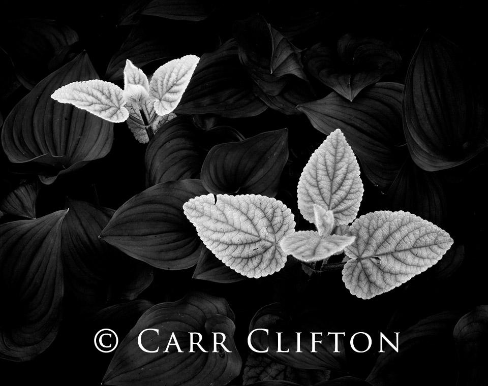 84-51-CA-i_copyright_carr_clifton