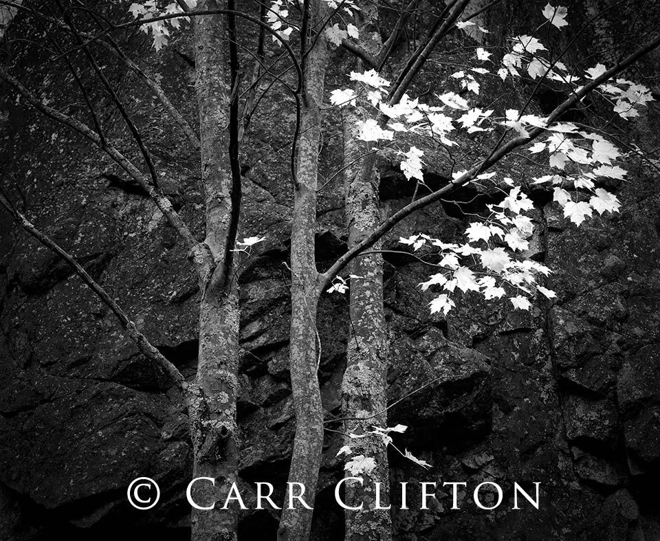 103-21-ME-i_copyright_carr_clifton