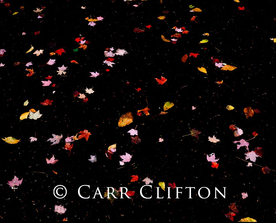 85-33-NY-i_copyright_carr_clifton