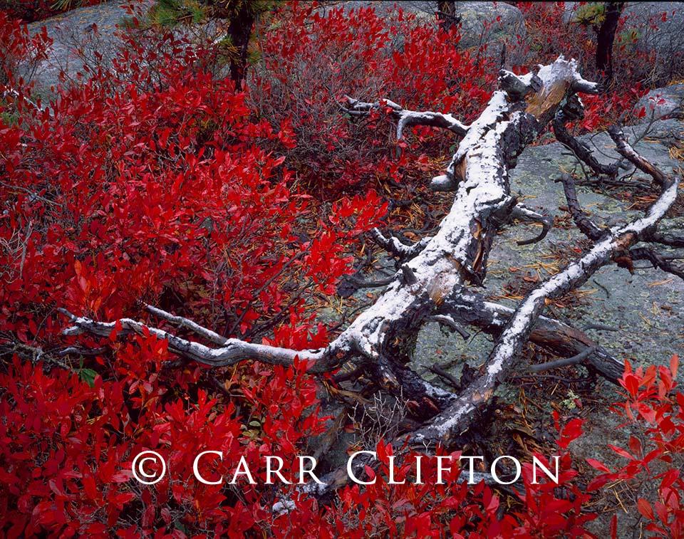88-208-NY-i_copyright_carr_clifton