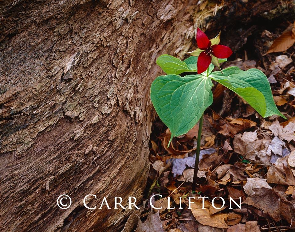 87-101-NY-i_copyright_carr_clifton