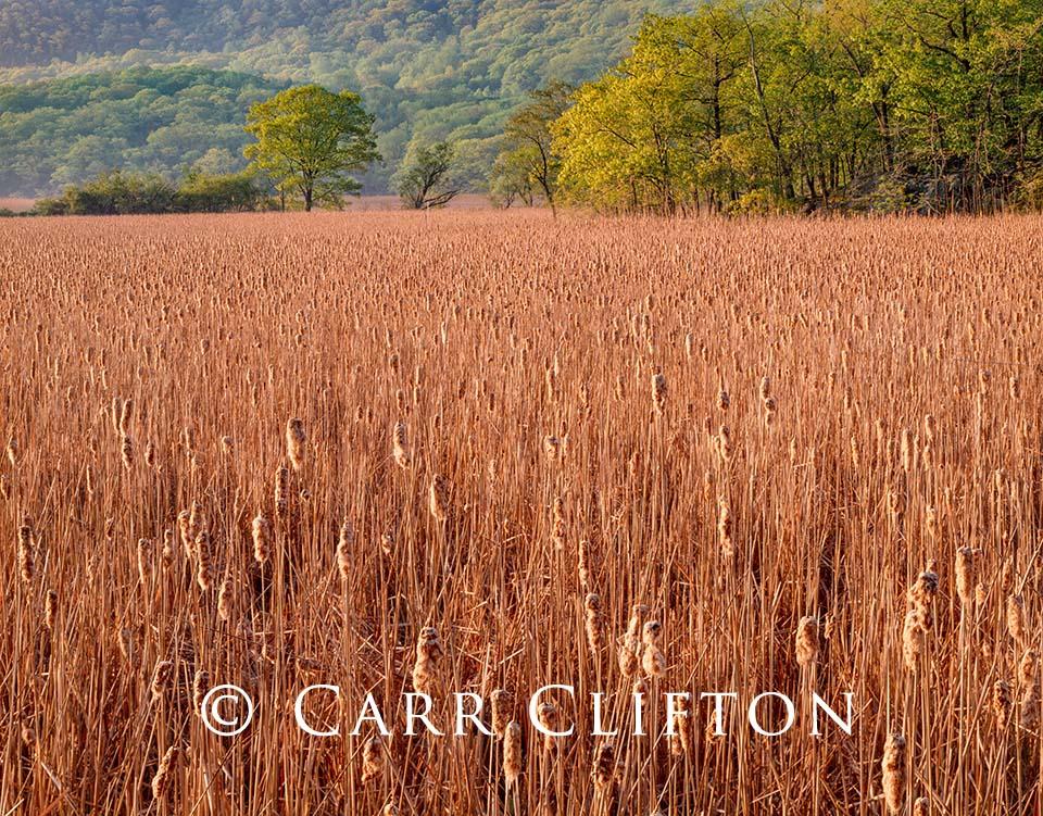 88-58-NY-i_carr_clifton