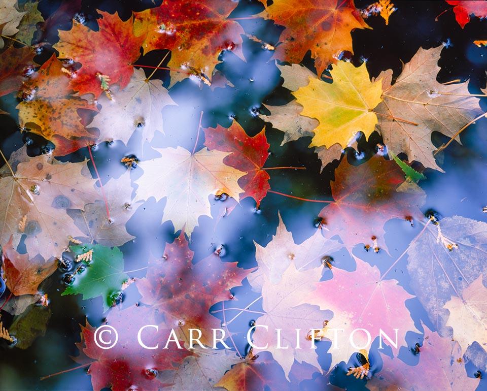 85-38-NY-i_copyright_carr_clifton