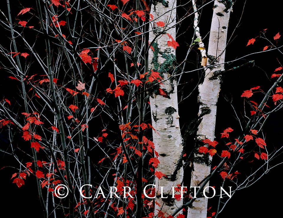 88-120-NY_carr_clifton