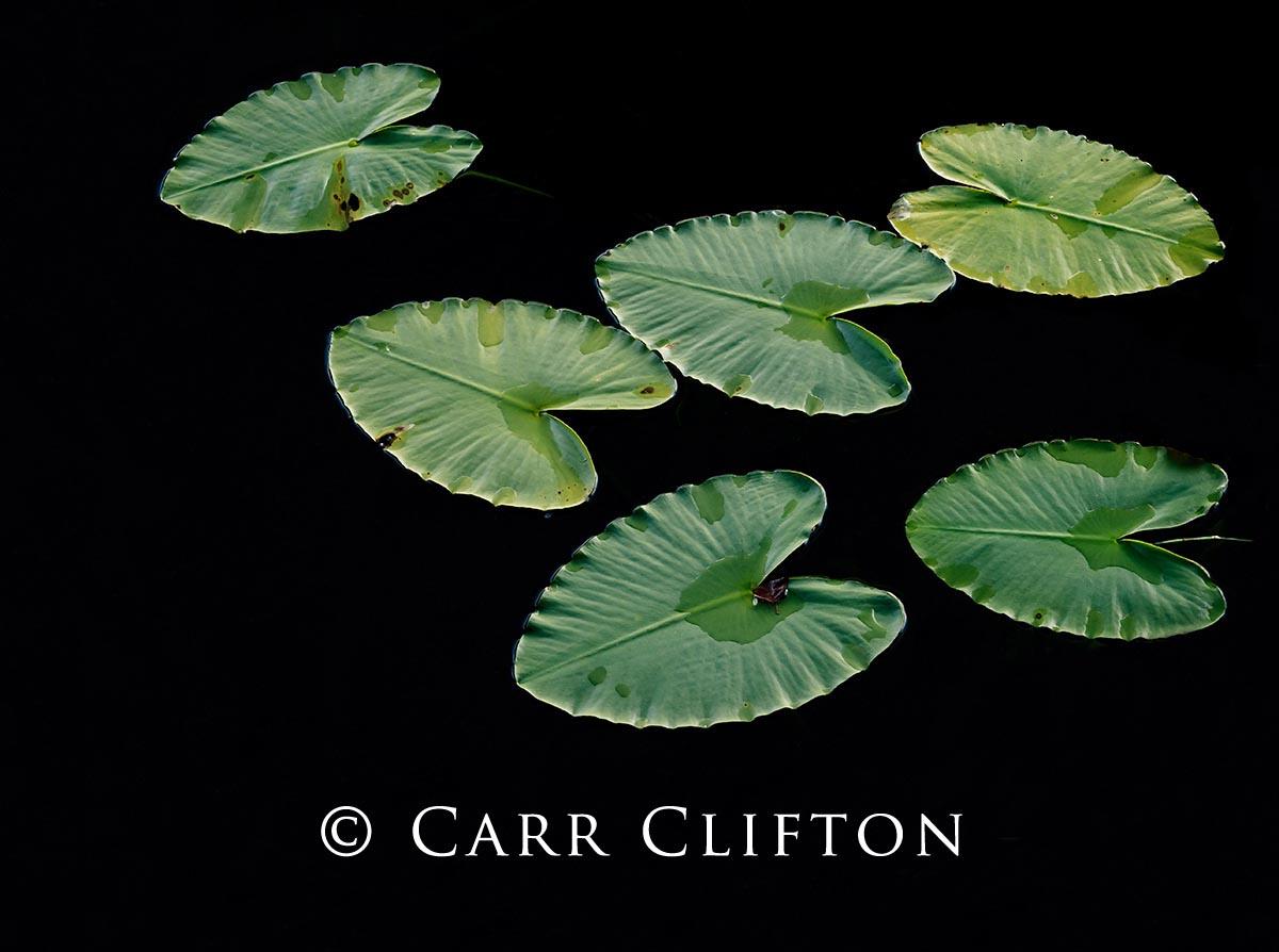 110-3017-BC_carr_clifton