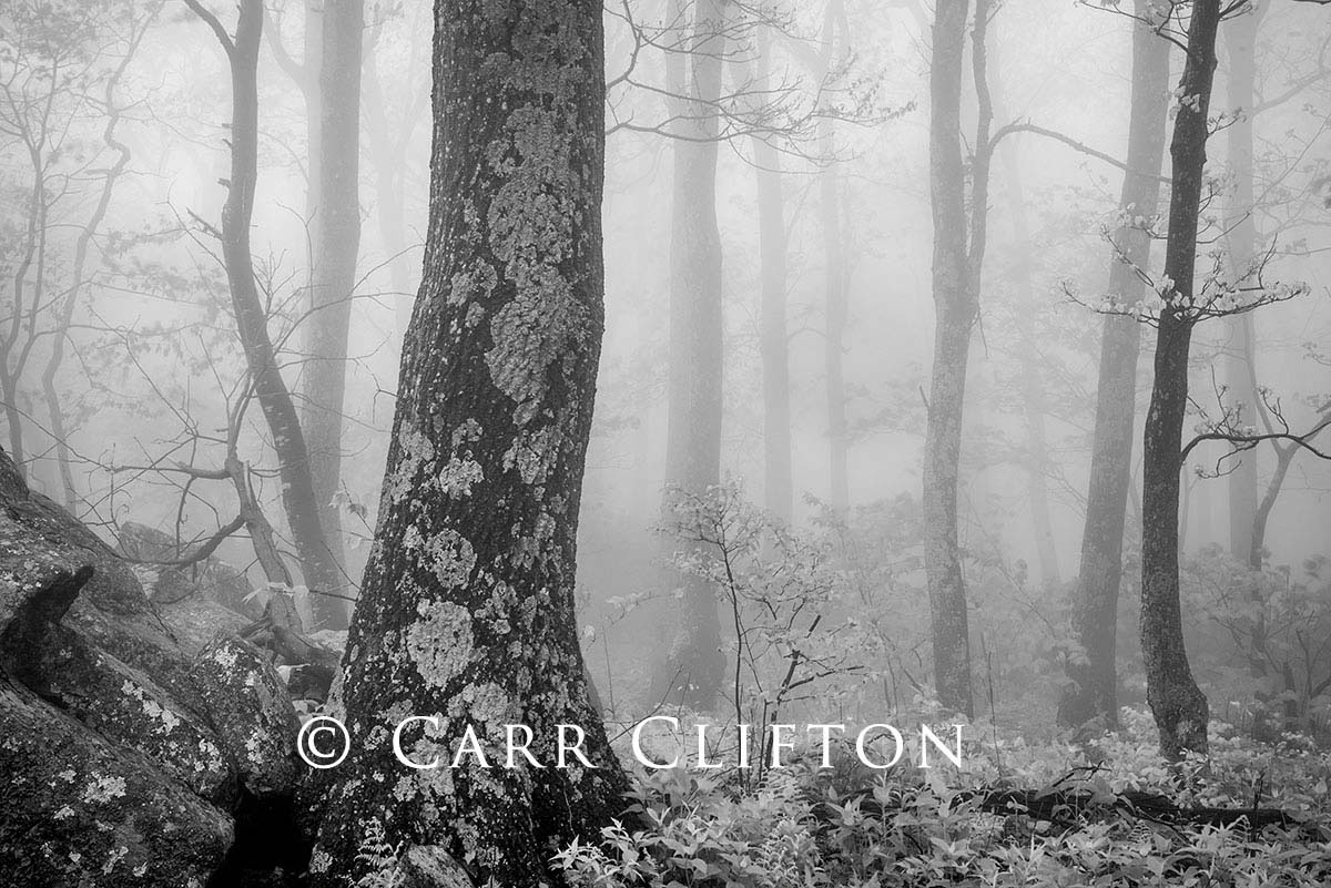114-1037-VA-2_carr_clifton