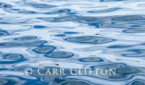 113-1277-MI_carr_clifton